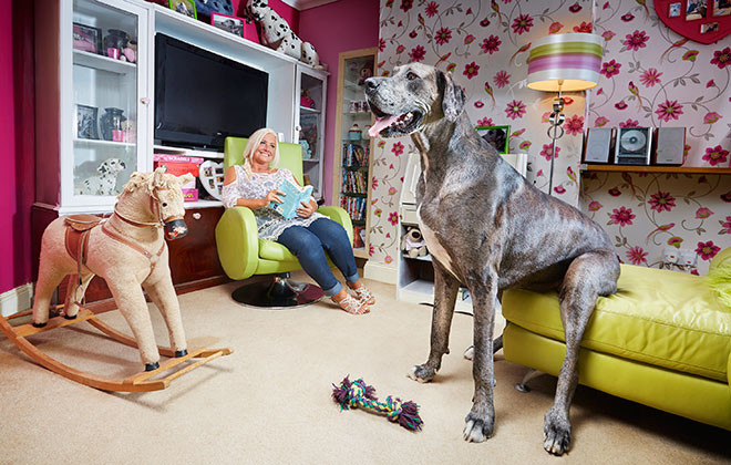 dog_Tallest dog living – male
