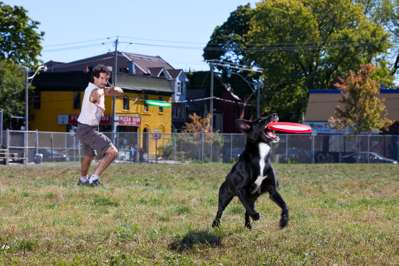 dog_Most flying discs (Frisbees) caught and held in the mouth by a dog