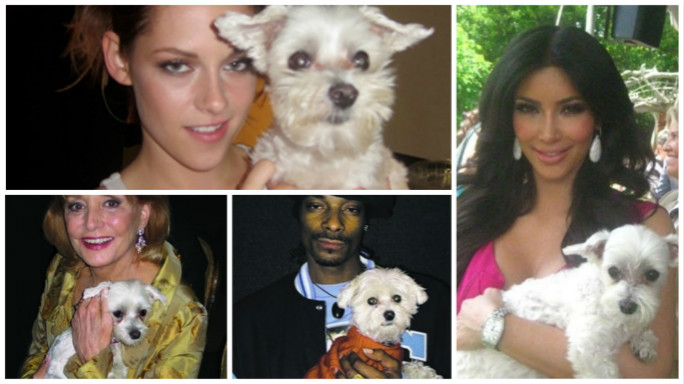 dog_animal photographed with the most famous people