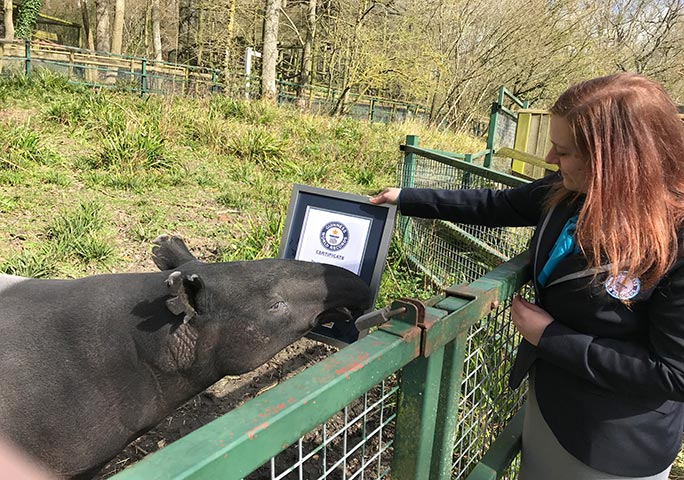 Kingut investigates his GWR certificate, presented by adjudicator Sheila Mella