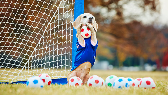 dog_Most balls caught by a dog with the paws in one minute